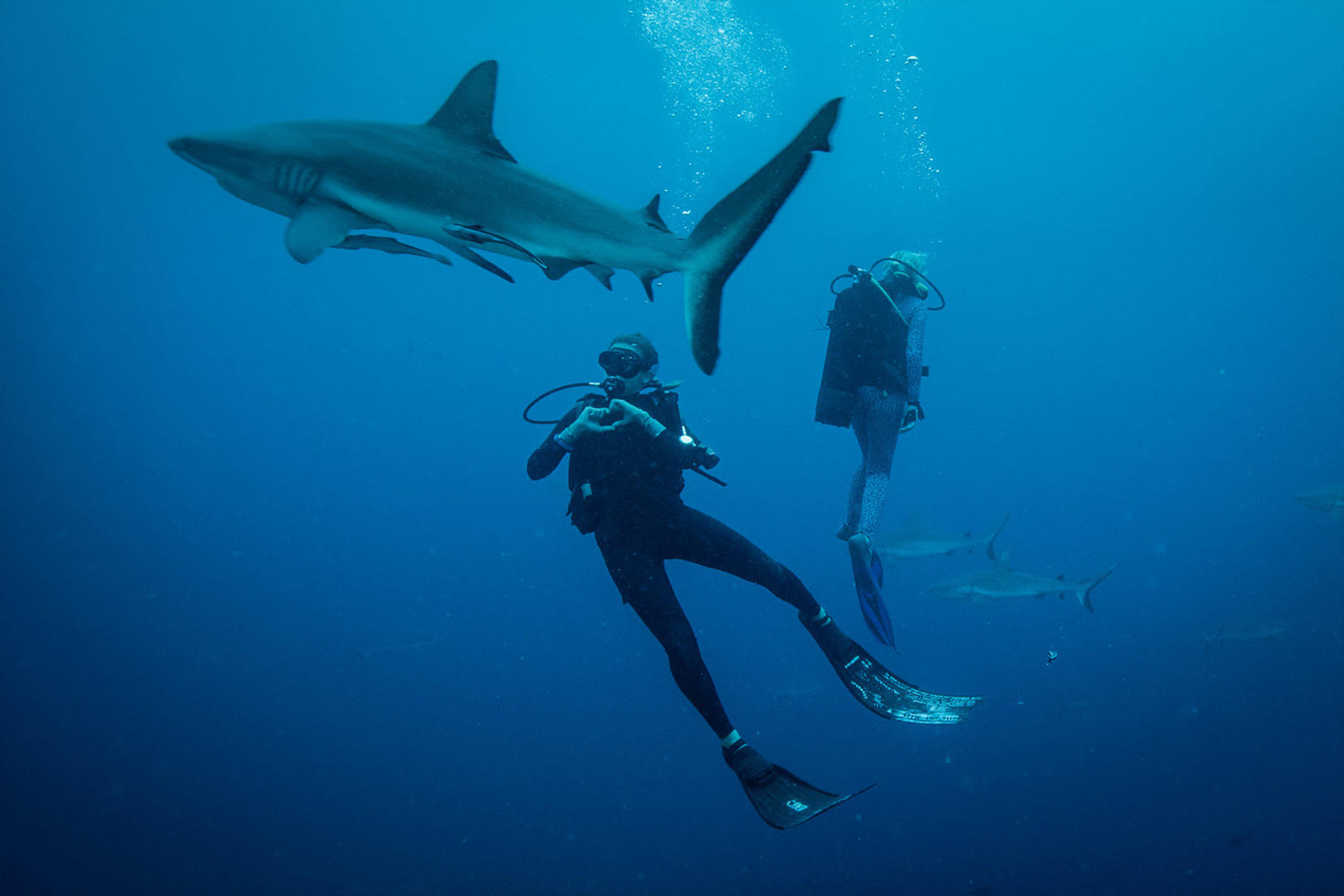 Ocean Films Shark Dive